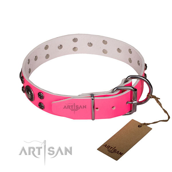 Everyday walking leather collar with rust resistant buckle and D-ring