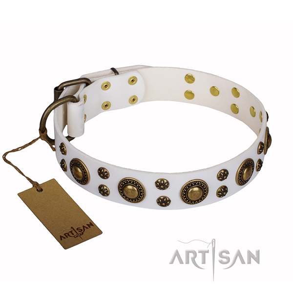 Stylish walking full grain genuine leather collar with adornments for your four-legged friend