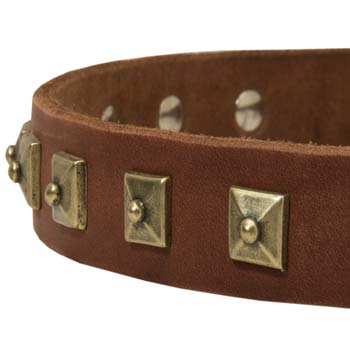 Cane Corso fashion leather dog collar