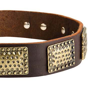 Fashion dog collar for Cane Corso with massive plates