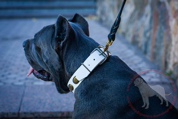 Fashion leather Cane Corso collar with strong D-ring and buckle