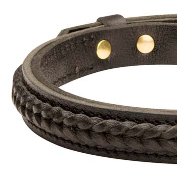 Premium quality leather dog collar for Boxers