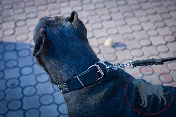 Leather Cane Corso collar with sturdy corrosion-resistant hardware