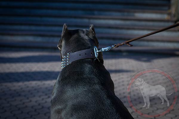 Leather Cane Corso collar with nickel plated hardware