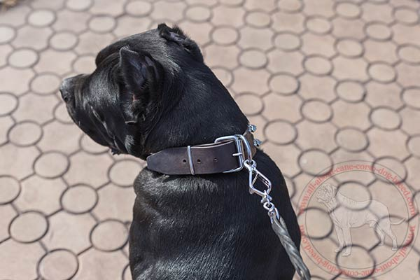 Leather Cane Corso collar with sturdy nickel covered hardware