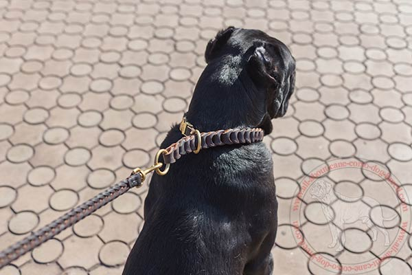 Leather choke collar for Cane Corso with brass hardware