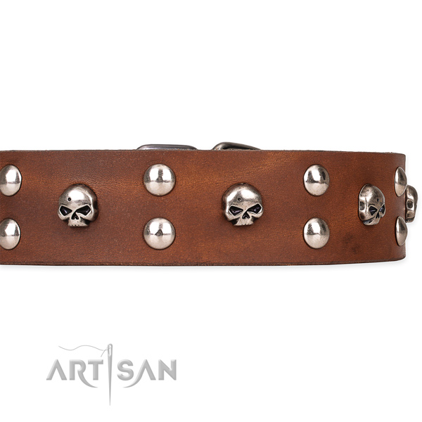 Full grain natural leather dog collar with polished finish
