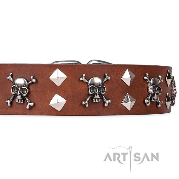 Everyday leather dog collar with stunning adornments