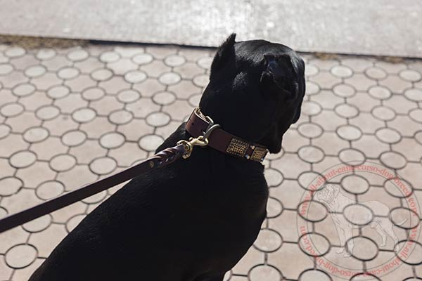 Leather dog collar for Cane Corso with brass plated hardware