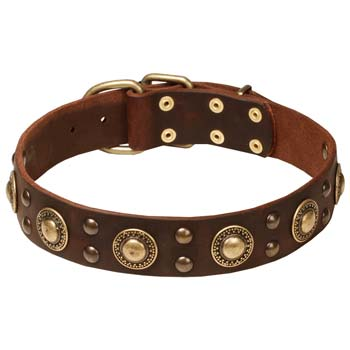 Brown leather dog collar for Cane Corso