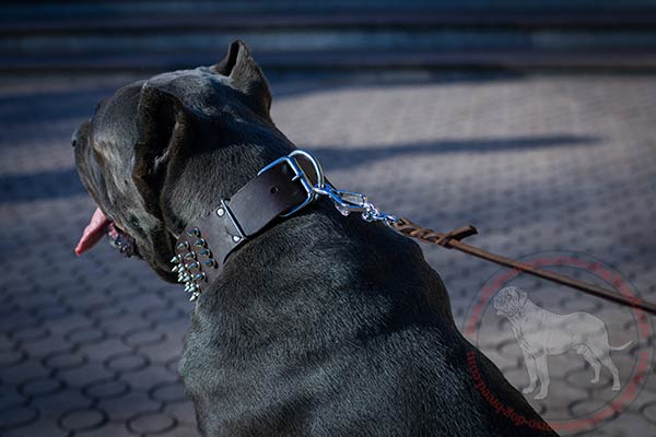 Leather dog collar for Cane Corso with strong hardware