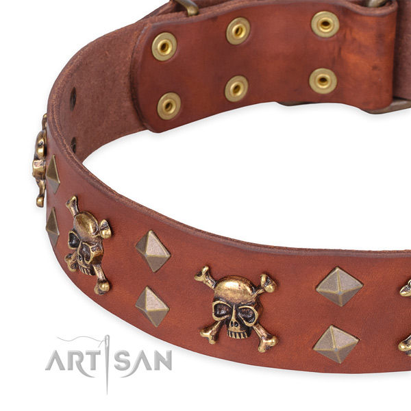 Cane Corso casual leather dog collar with exceptional embellishments