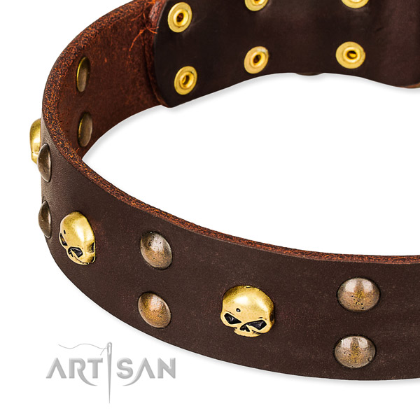 Day-to-day leather dog collar for stylish walking