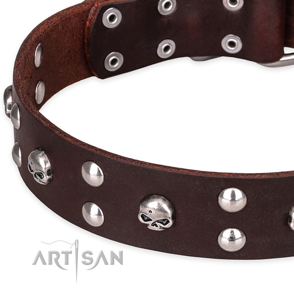 Daily leather dog collar with elegant studs