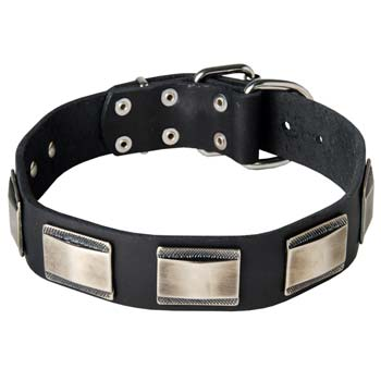 Newest leather dog collar for Mastino Napoletano breed