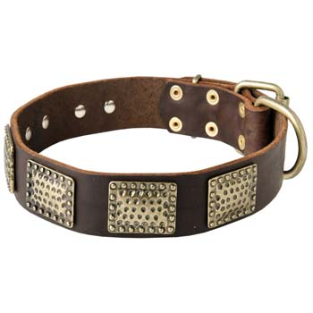 Hand crafted leather Mastino Napoletano collar for  walking