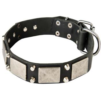 Exclusive leather dog collar for Mastino Napoletanos'  walks