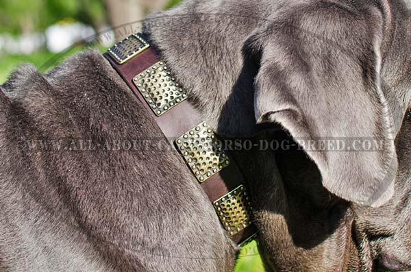 Highly-sought Leather Mastino Napoletanos Collar for  Dress-Conscious Dogs