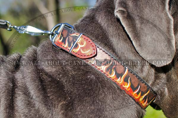 Mastino leather collar for walking and training
