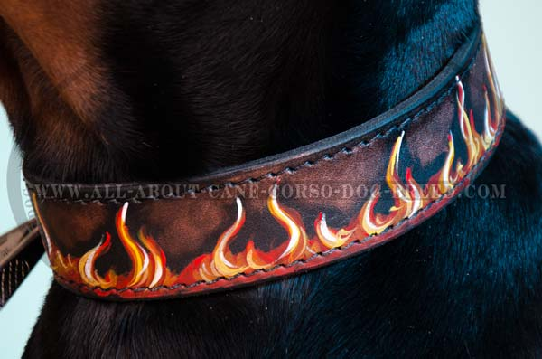Painted collar on Cane Corso dog