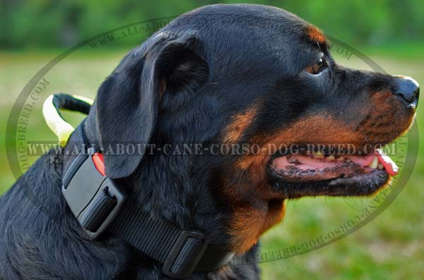 High Grade Nylon Rottweiler Collar with Control Handle