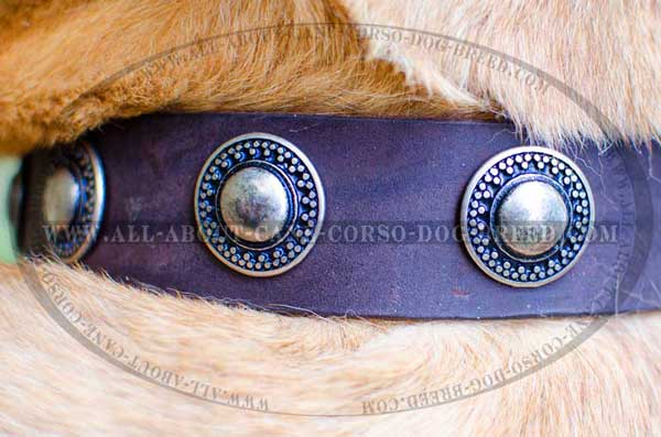 Gorgeous Conchos Hand Riveted to Leather Collar