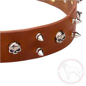 Rust proof spikes and skulls of leather Cane Corso collar