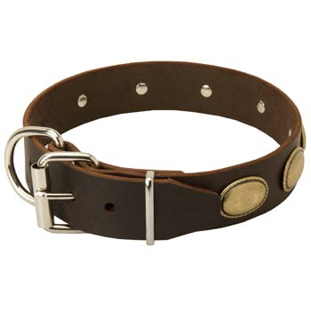 Oval brass plates Cane Corso leather fashion collar