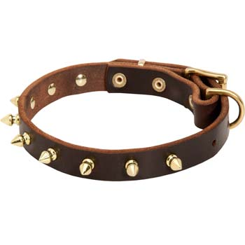 Golden spikes leather collar for Cane Corso