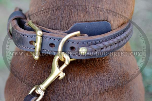 One-Of-A-Kind Leather Dog Collar