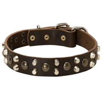 Cane Corso leather collar with pyramids and studs