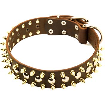 Cane Corso Fashion leather Spiked dog collar with fancy adornment