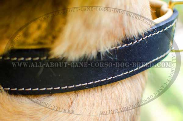 Carefully stitched leather dog equipment