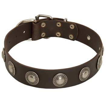 Cane Corso wide leather collar with decoration