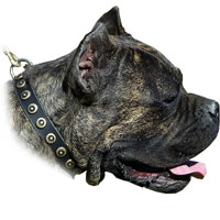 This collar is made of very strong, durable and soft, solid leather