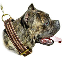 Handcrafted Leather Cane Corso Collar