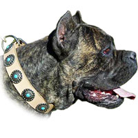 >Leather Dog Collar with Silver Circles Blue Stones