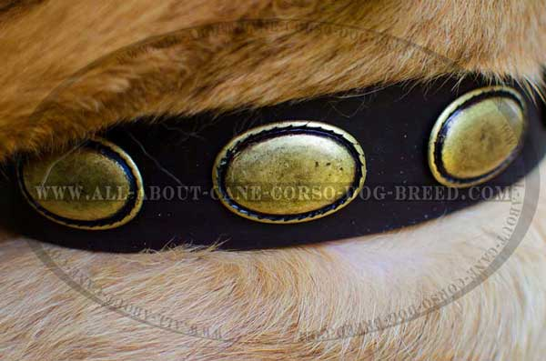 Dog leather collar featuring great decoration