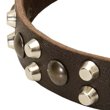 Cane Corso leather fashion collar polished and decorated