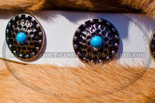 Awesome conchos against white leather background