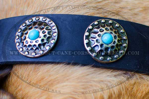 Conchos as decoration of buckle dog collar