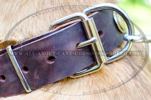 Nickel-plated buckle and D-ring for leash