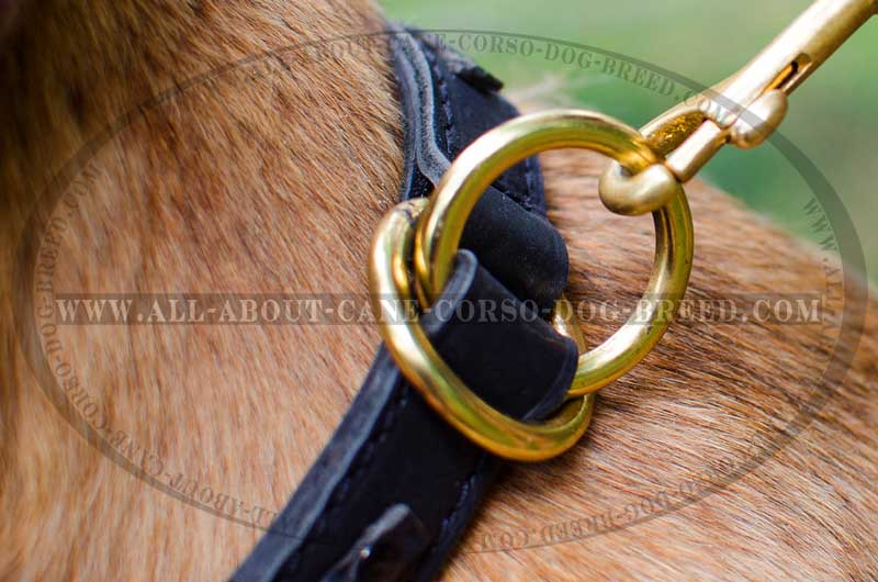 leash ring corso cane dog collar collars braided choke training leather meant connection