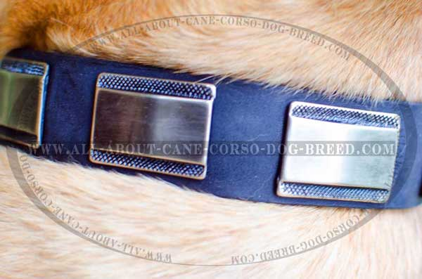 Nickel plates - awesome adornment for dog gear