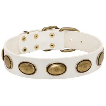Extra strong leather white Cane Corso collar with gorgeous plates