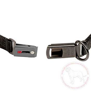 Click-lock buckle of curogan pinch collar