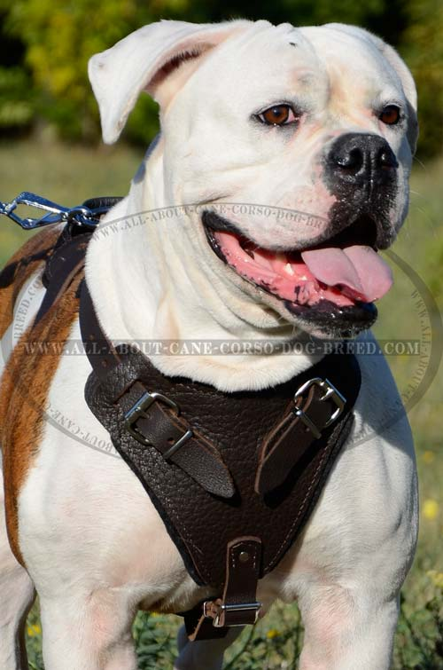 Extremely Comfortable Leather Dog Harness for Regular Wear