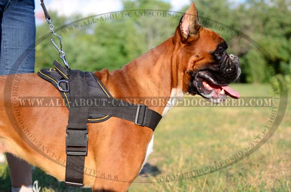 First-rate Nylon Dog Harness for Boxers