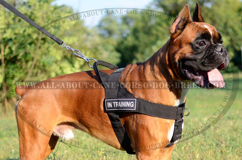 Weatherproof Nylon Patch Dog Harness For Moscow Watchdog's Service