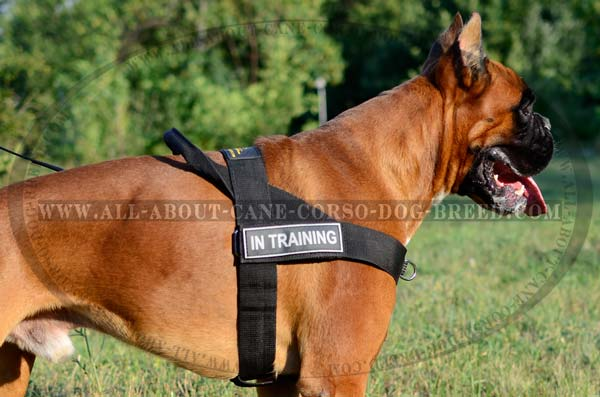 Walking/Training Boxer Nylon Harness